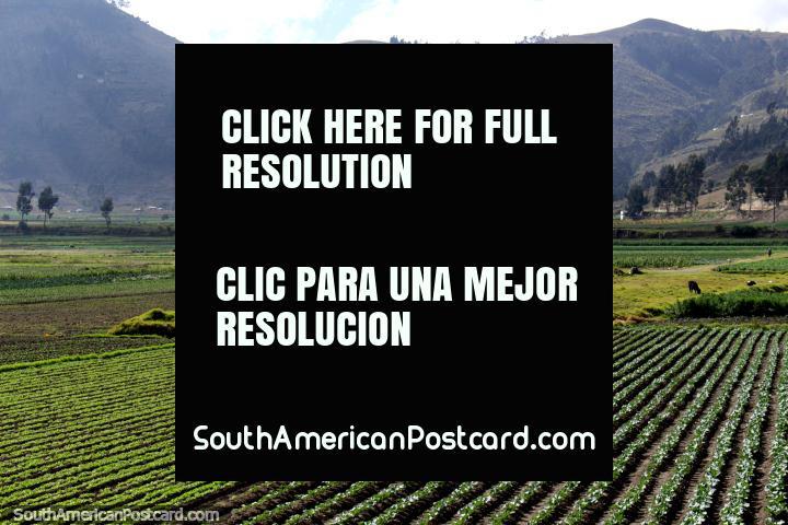 Crop fields and hills around Cajabamba, south of Riobamba. (720x480px). Ecuador, South America.