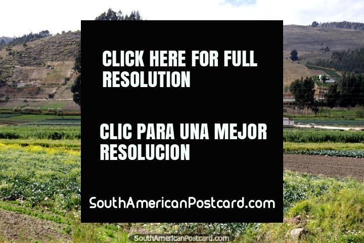 The countryside around Cajabamba, south of Riobamba. (720x480px). Ecuador, South America.