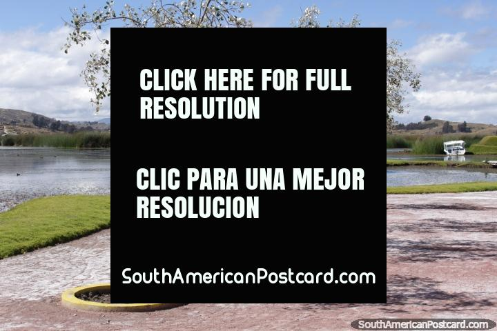 Uma linha de árvores frondosas de prata em Lagoa Colta. (720x480px). Equador, América do Sul.