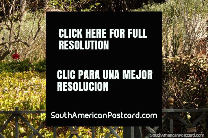 Bright green gardens and light at Parque Abdon Calderon in Cuenca. (720x480px). Ecuador, South America.