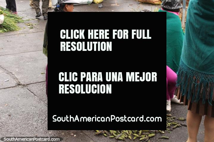 Quechua woman peels green beans at the Pujili market. (720x480px). Ecuador, South America.