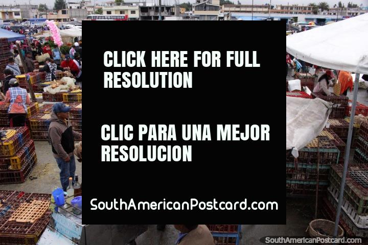 Praça Vicente Rocafuerte, o mercado dos animais vivo em Saquisili. (720x480px). Equador, América do Sul.