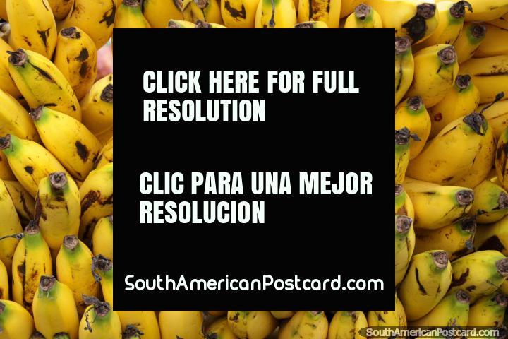 50 bananas from the same family at Saquisili market. (720x480px). Ecuador, South America.