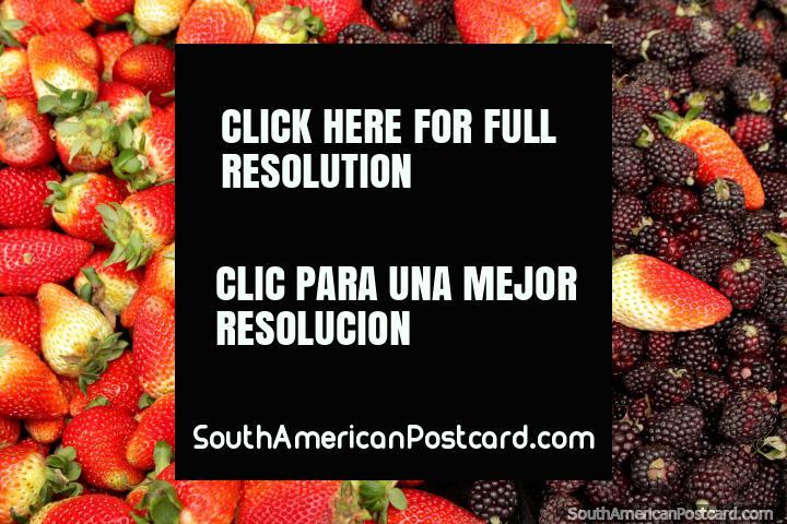 Morangos e boysenberries, ombro a ombro em Praça Kennedy, Saquisili. (720x480px). Equador, América do Sul.