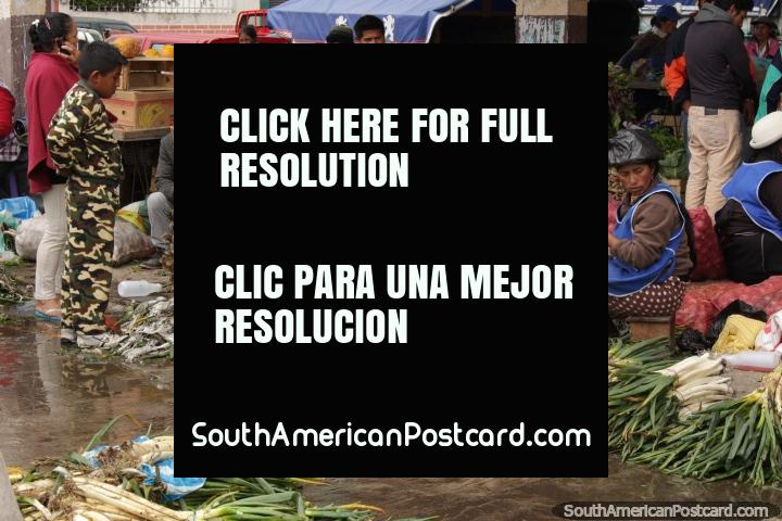 2 Quechua women organize their spring onions to sell at Plaza Gran Colombia in Saquisili. (720x480px). Ecuador, South America.