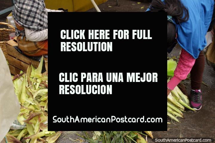 Peeling corn cobs and pea pods at Plaza Gran Colombia in Saquisili. (720x480px). Ecuador, South America.
