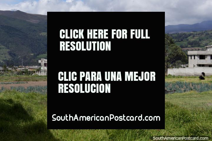 Colinas e terra de cultivo em Machachi, examine da estrada. (720x480px). Equador, América do Sul.