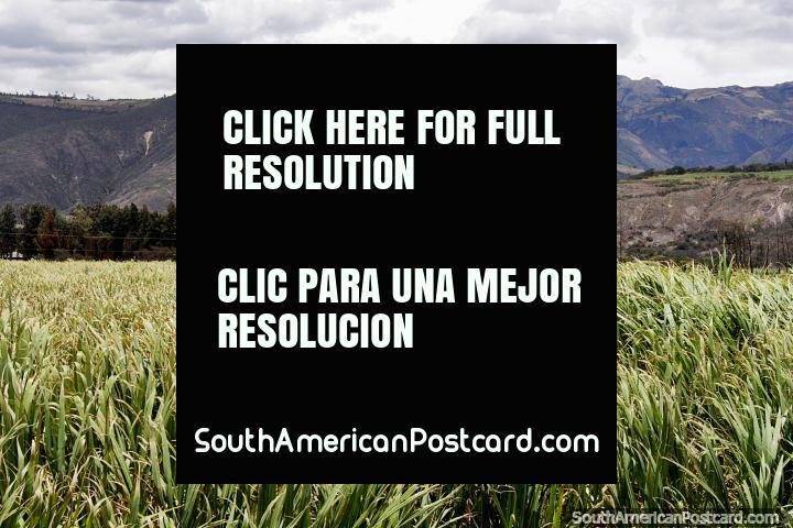 Montanhas e tïtulo de terreno verde para o Noroeste de Ibarra a San Lorenzo. (720x480px). Equador, América do Sul.