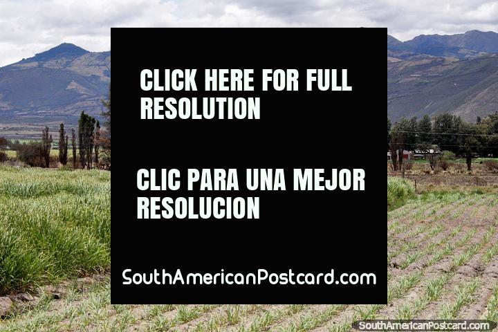 Colheitas, campos verdes, árvores e montanhas entre Ibarra e San Lorenzo. (720x480px). Equador, América do Sul.