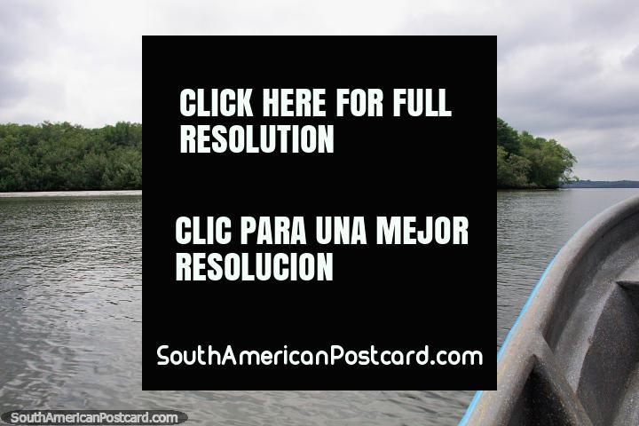 Excursão de barco da costa de San Lorenzo, païs de mangue. (720x480px). Equador, América do Sul.