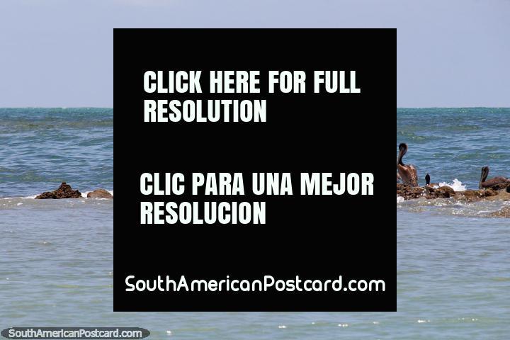 Pelicans on rocks beside Bird Island at Atacames beach, large wing span. (720x480px). Ecuador, South America.