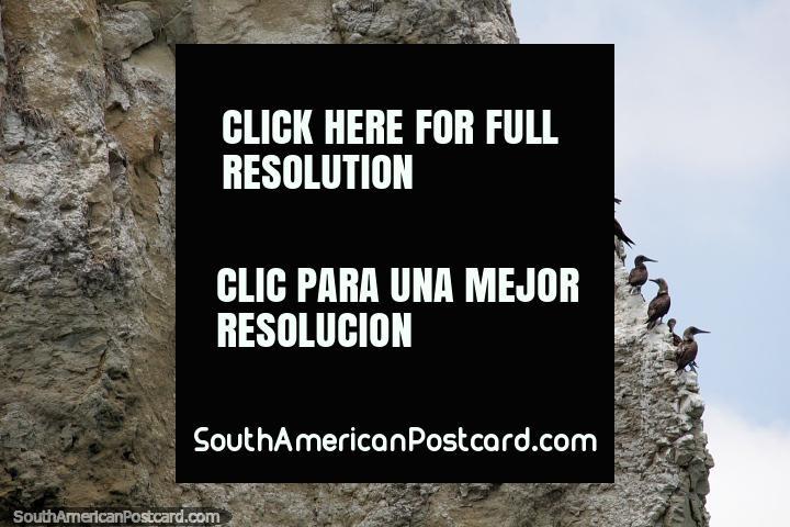 Sea birds on the rock face of Bird Island off the coast of Atacames beach. (720x480px). Ecuador, South America.