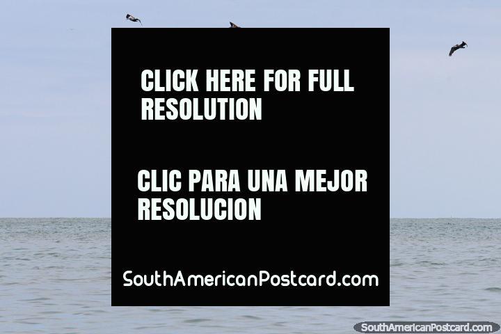 5 pelicanos voam sobre o barco de pesca chamado Angel da costa de Atacames. (720x480px). Equador, América do Sul.