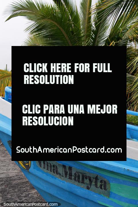 Barco azul al lado de una pequeña palmera en la playa en Mompiche. (480x720px). Ecuador, Sudamerica.