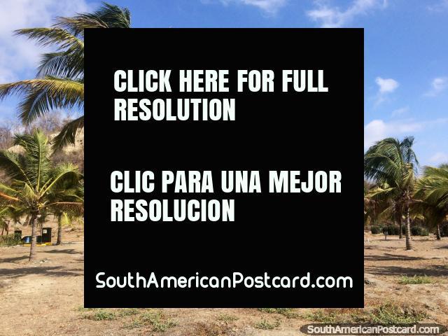 Palmeiras atrás das linhas de palmeiras em praia de El Matal, bela. (640x480px). Equador, América do Sul.