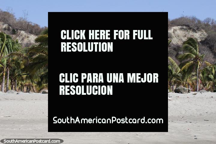 Fantástica casa de playa rodeada de palmeras en El Matal cerca de Jama. (720x480px). Ecuador, Sudamerica.
