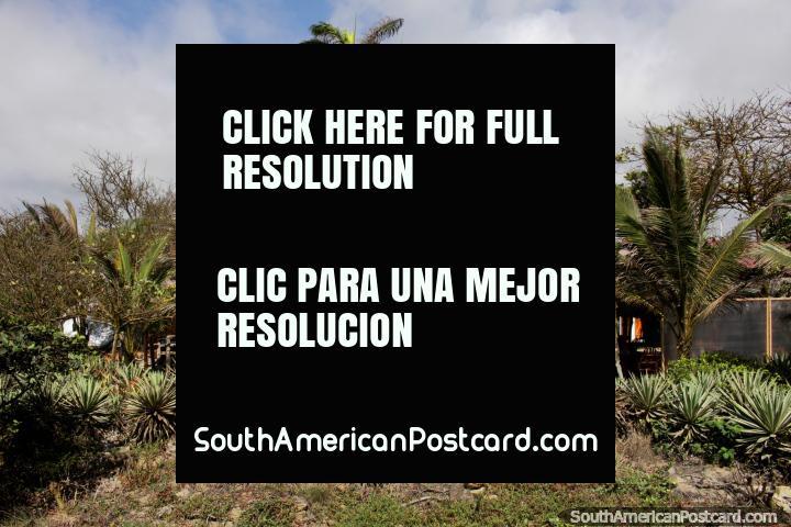 Accommodation beside Canoa beach with palm trees and nice gardens. (720x480px). Ecuador, South America.