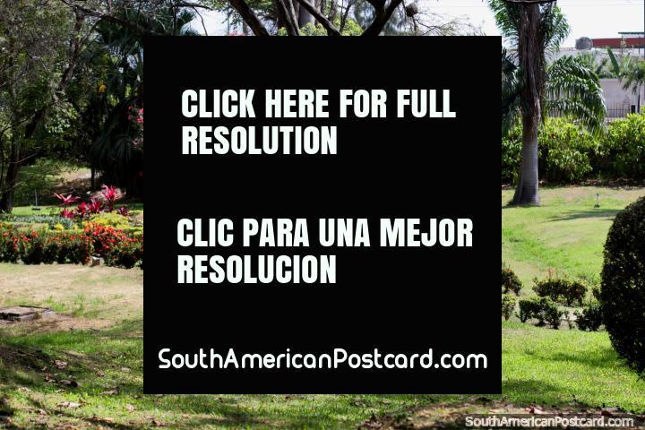 Flora rosa e vermelha, a beleza verde dos jardins botânicos em Portoviejo. (720x480px). Equador, América do Sul.