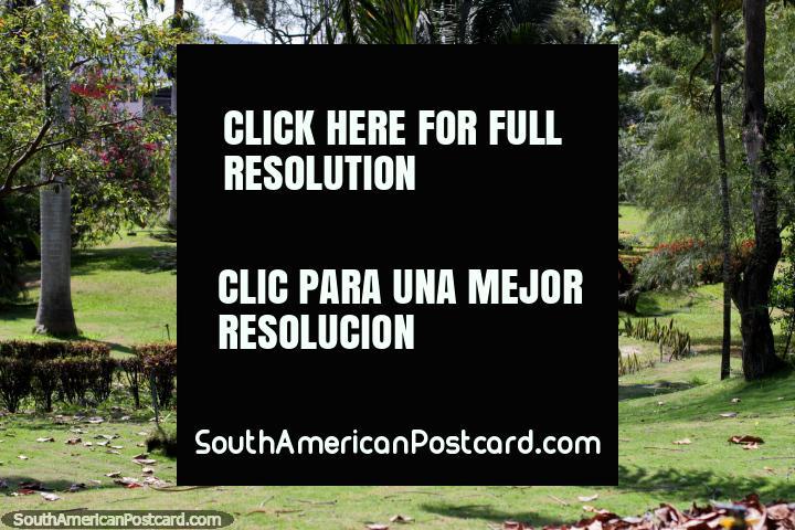 Caminho por um jardim de altas árvores, fetos, grama e flores nos jardins botânicos em Portoviejo. (720x480px). Equador, América do Sul.