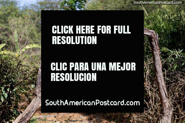 Entrada de madeira feita de ramos de árvore, somente para demonstração, jardins botânicos, Portoviejo. (720x480px). Equador, América do Sul.