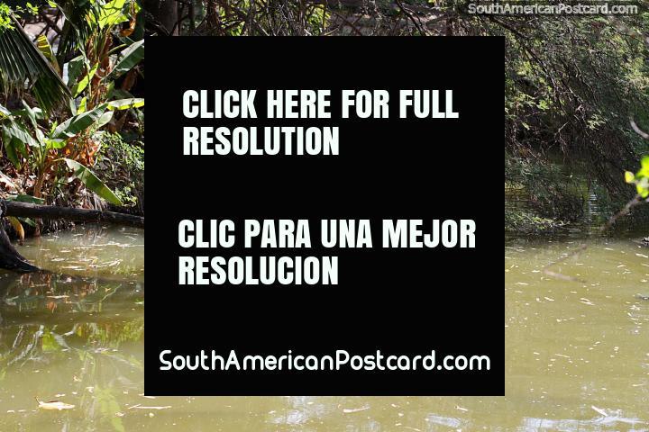Par de pequeñas tortugas en una rama de madera en el estanque de los jardines botánicos, Portoviejo. (720x480px). Ecuador, Sudamerica.