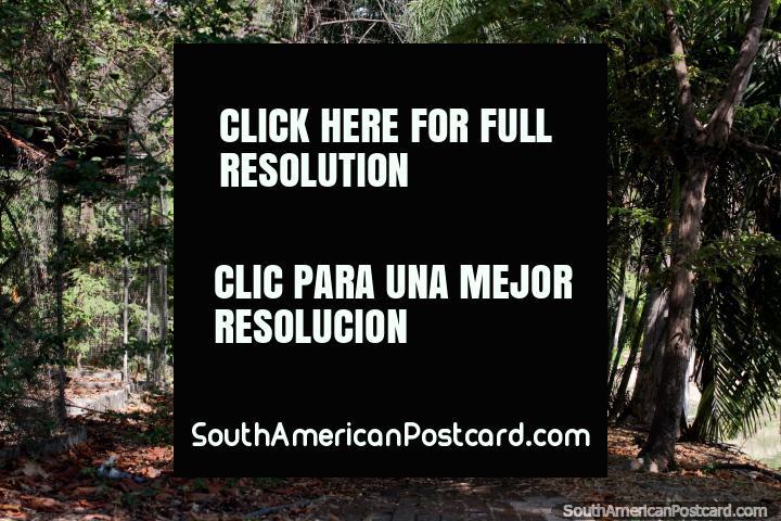 Pathway through an area of thick trees, peace and quiet, botanical gardens, Portoviejo. (720x480px). Ecuador, South America.