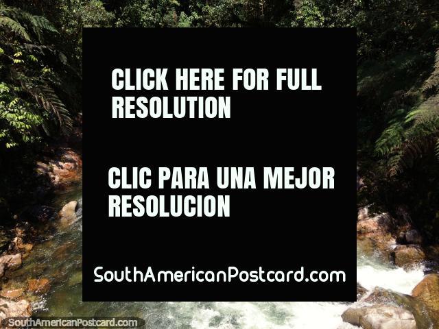 Bombuscaro River at Podocarpus National Park, view from the El Campesino Bridge. (640x480px). Ecuador, South America.