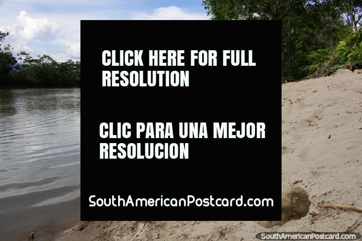 Playa Rica es pequeña pero tiene arenas blancas, aguas tranquilas y hermosos alrededores en Yantzaza. (720x480px). Ecuador, Sudamerica.