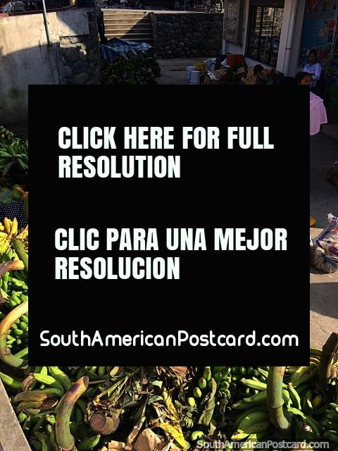 8am in Gualaquiza on Sunday, market day, ripening bananas and papaya arrive. (480x640px). Ecuador, South America.