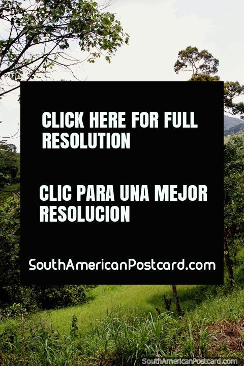 Zona rural equatoriana em volta de Tucumbatza, muito verde, ao norte de Gualaquiza. (480x720px). Equador, América do Sul.