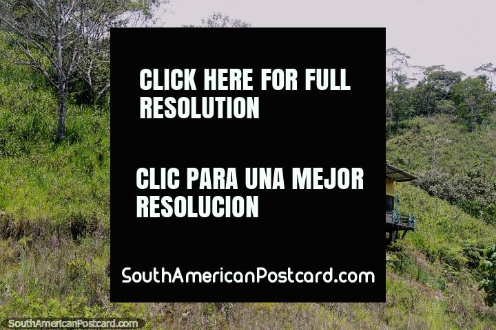 As pequenas casas de madeira empoleiraram-se em uma ladeira, violão na parede dianteira, em volta de San Juan Bosco, ao sul de Limon. (720x480px). Equador, América do Sul.