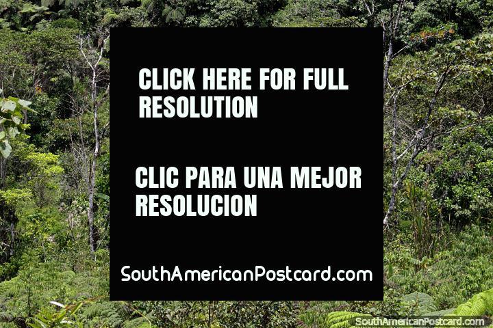 Casa de cabana de madeira escondida em arbusto gordo entre San Juan Bosco e Limon. (720x480px). Equador, América do Sul.