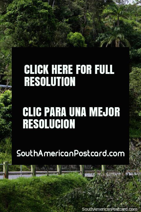 A casa de madeira rosa em uma colocação bonita rodeia-se de árvores em Limon. (480x720px). Equador, América do Sul.