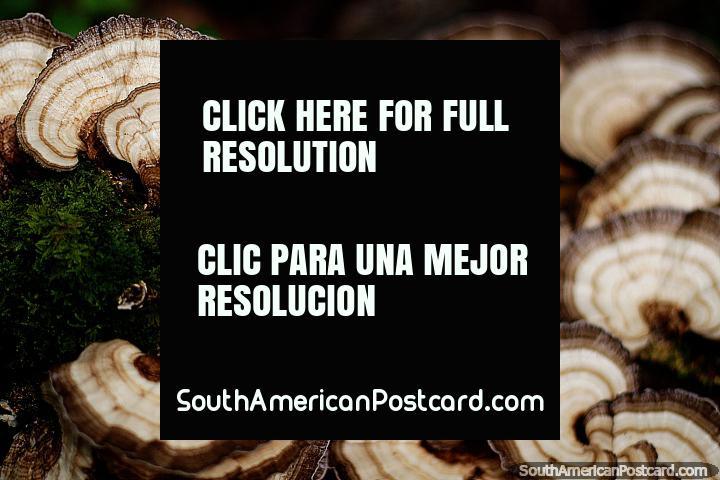 Looks like slices of mushroom, exotic flora at Omaere botanical park in Puyo. (720x480px). Ecuador, South America.