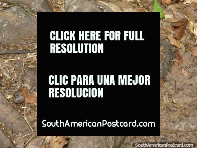 Mariposa negra y naranja en Parque Nacional Ybycui. (640x480px). Paraguay, Sudamerica.