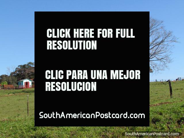 Un árbol enorme y un cortijo en tierra entre Trinidad y Jesús, Encarnacion. (640x480px). Paraguay, Sudamerica.