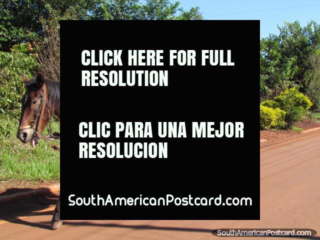 El hombre en caballo y carro da los pulgares en Jesús cerca de Encarnacion. (640x480px). Paraguay, Sudamerica.