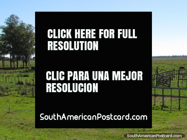 Árboles, ganado y cercas de madera en el campo entre el General Delgado y Santa Rosa. (640x480px). Paraguay, Sudamerica.