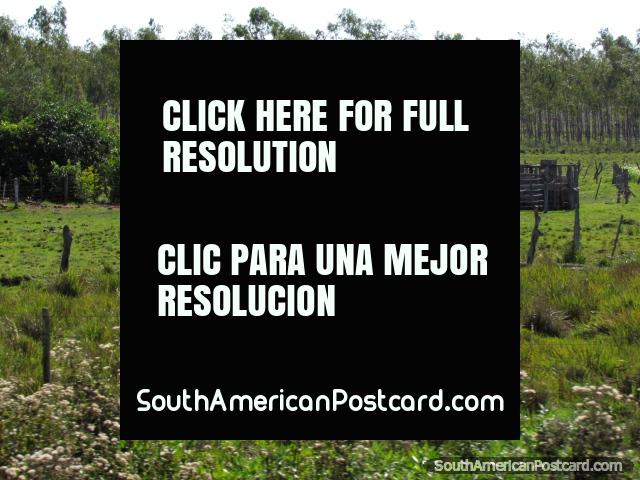 Abrigo de gado e cercas em uma fazenda entre o General Delgado e Santa Rosa. (640x480px). Paraguai, América do Sul.