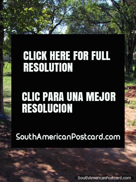Calzada de la suciedad que lleva a una propiedad del país treed, entre el General Delgado y Santa Rosa. (480x640px). Paraguay, Sudamerica.