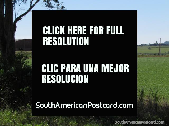 Uma torre de água e campos de colheita como vimos em direção a Santa Rosa. (640x480px). Paraguai, América do Sul.