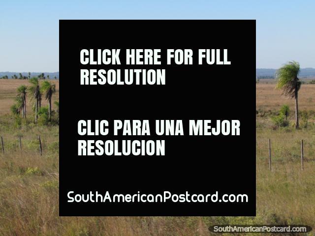 Campos entre o caminho e montanhas entre Caapucu e Quiindy. (640x480px). Paraguai, América do Sul.