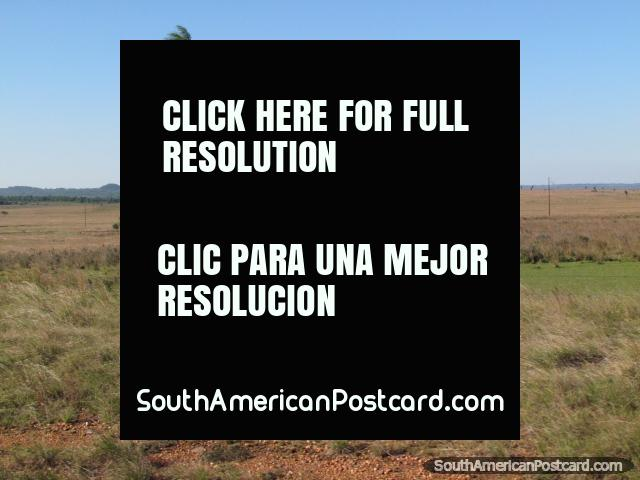 Sweeping plains, palm, distant mountains, between Caapucu and Quiindy. (640x480px). Paraguay, South America.