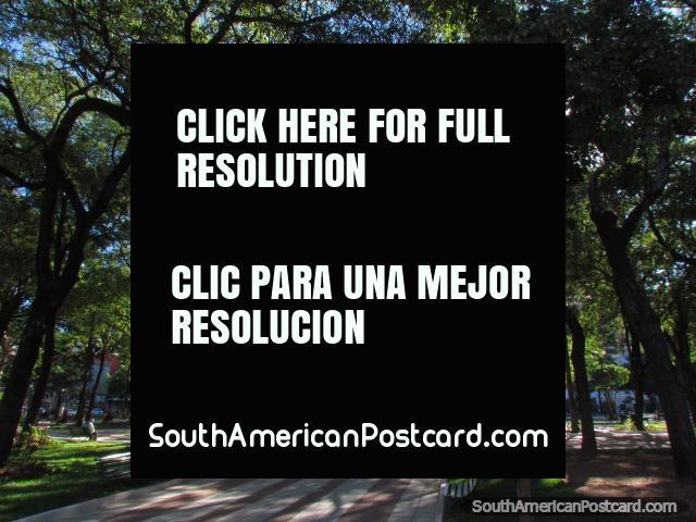 The beautiful shady Plaza Uruguaya in Asuncion. (640x480px). Paraguay, South America.
