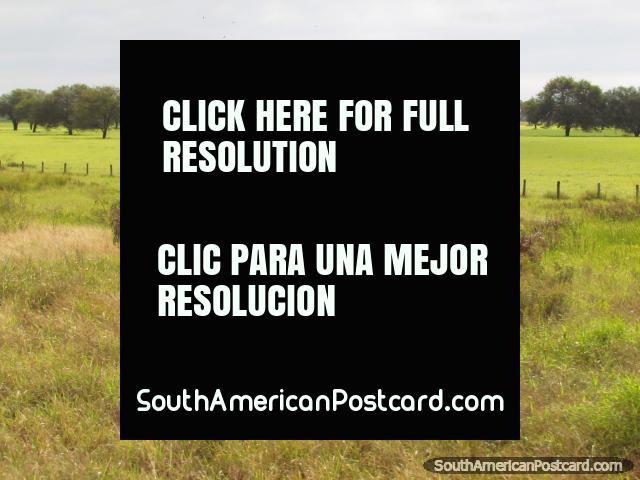 Un campo verde vivo llano con árboles en Gran Chaco. (640x480px). Paraguay, Sudamerica.