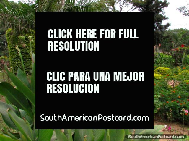 Jardins de flores verdes e coloridos, sebes e arbustos em Parque da Memoria, Filadelfia. (640x480px). Paraguai, América do Sul.