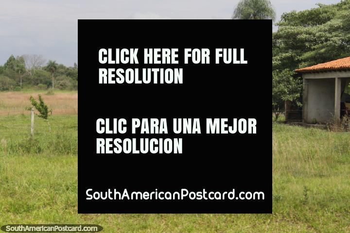 El hombre se sienta bajo un árbol mientras que la esposa siega el césped, vida en el campo en Paraguay, al sur de Oviedo. (720x480px). Paraguay, Sudamerica.