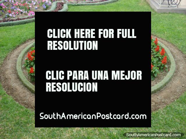 Plaza in Tacna, red flower bed. (640x480px). Peru, South America.