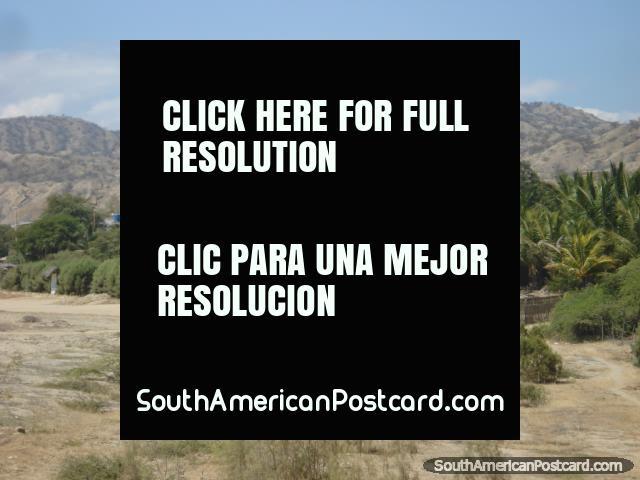 Una gran vista de las palmeras y colinas detrás de Mancora en la costa del norte. (640x480px). Perú, Sudamerica.