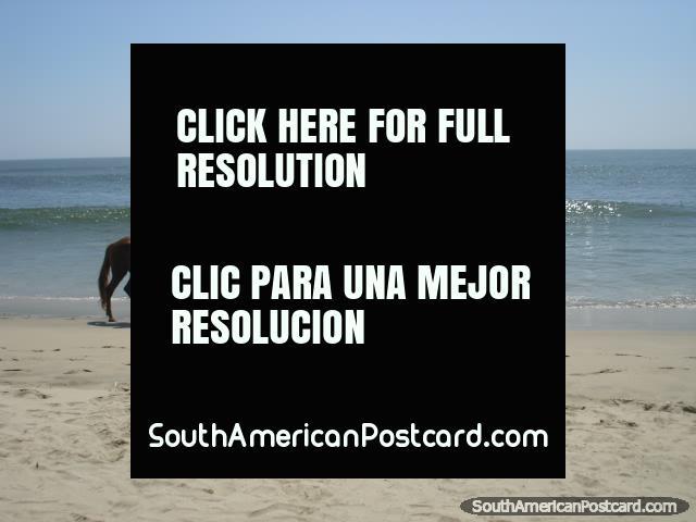 Cavalo que monta em praia de Mancora. (640x480px). Peru, América do Sul.